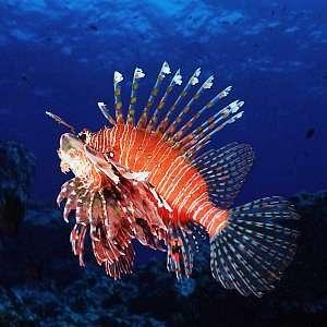 f031820t - Balıklarla ilgili ilginç bilgiler