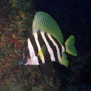 sea fish/water fish/eating fish/fry fish/red fish/bhetki fish/www fish/fish pdf/image of fish/fish photos