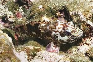 Fish of Niue